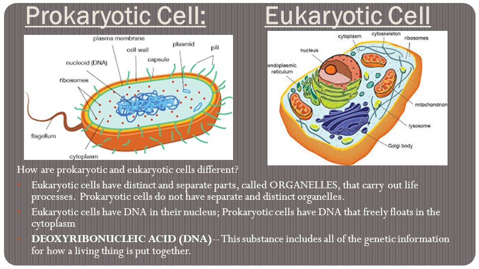What Is The Difference Between Eukaryotic Cells And Prokaryotic