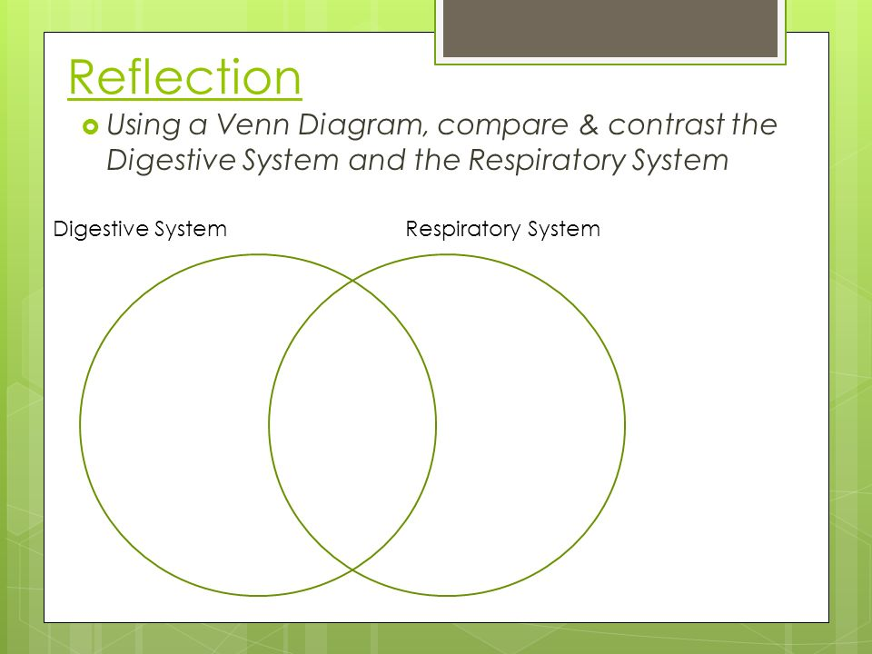 Respiratory system introduction ppt download reflection using a venn diagram compare contrast the digestive system and the respiratory system ccuart Image collections