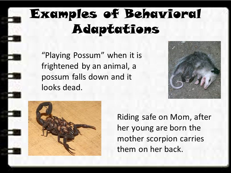 Lesson 1 What Are Adaptations Ppt Video Online Download