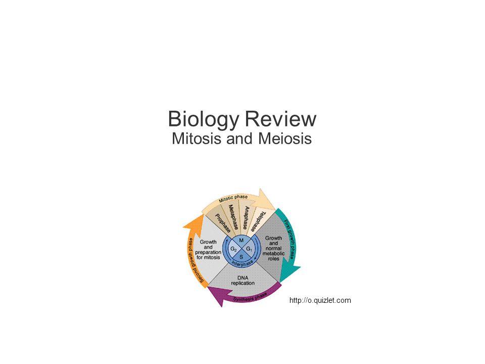 SISTER CHROMATID DEFINITION BIOLOGY QUIZLET - Locus (genetics)