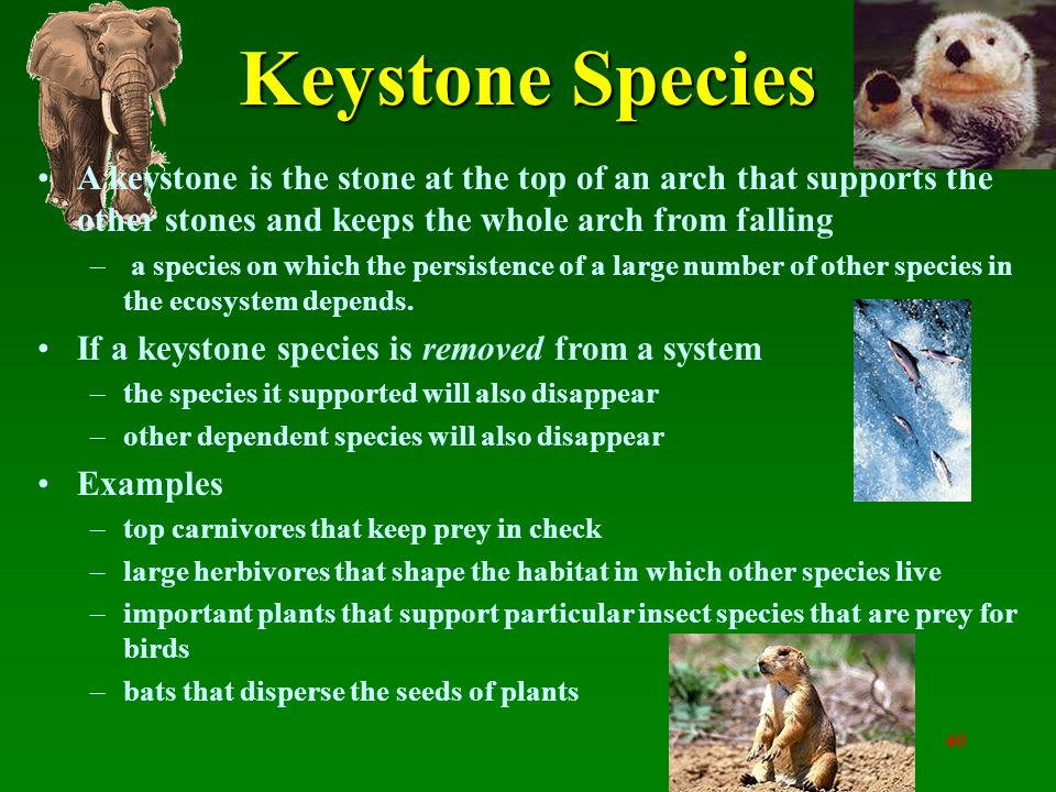 Keystone Species Example Gallery Example Cover Letter For Resume