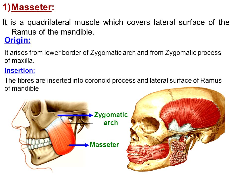 Muscles Of Mastication Ppt Video Online Download