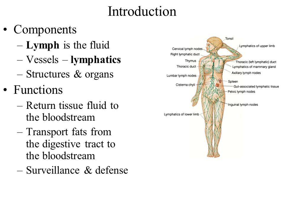 Lymphatic System Chapter Ppt Download