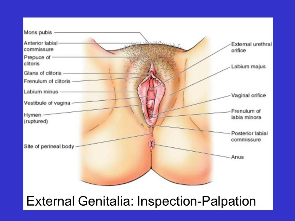 Review Of Anatomy Of The Female Reproductive System Ppt Video