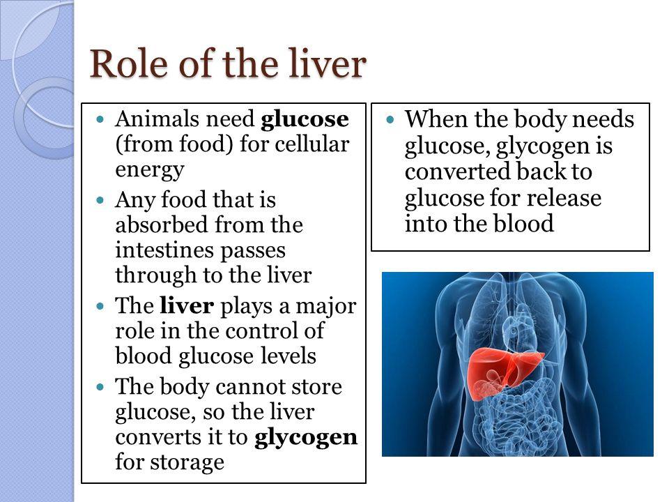 Regulating Blood Glucose Levels Ppt Video Online Download
