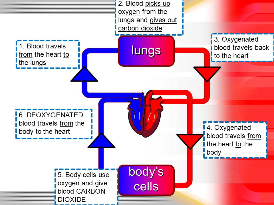 Oxygenated And Deoxygenated Blood Diagram Block And Schematic