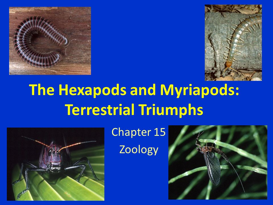 The Hexapods and Myriapods: Terrestrial Triumphs