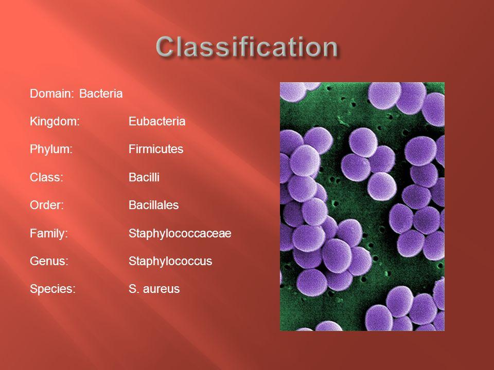 Epidemiology of methicillin
