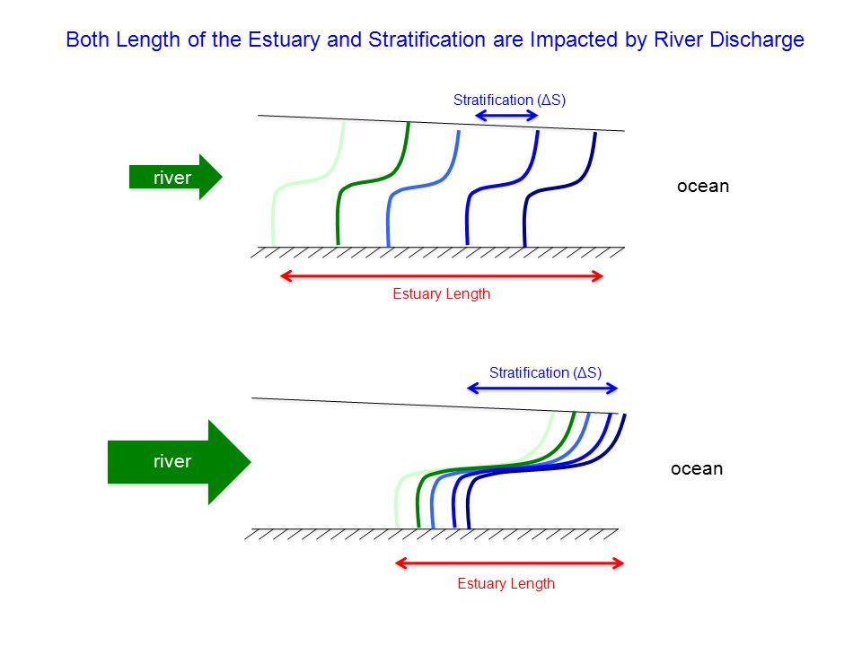 Stratification Estuary Diagram Electrical Work Wiring Diagram