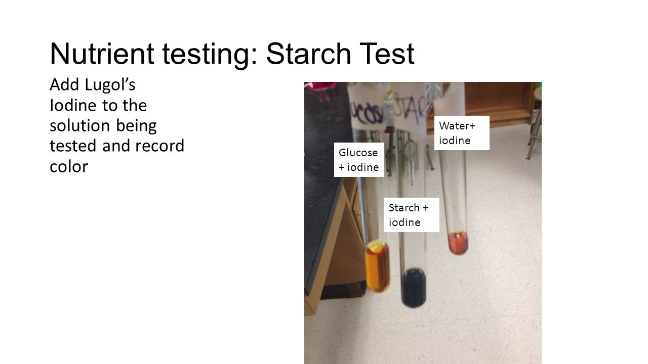 test for starch lab