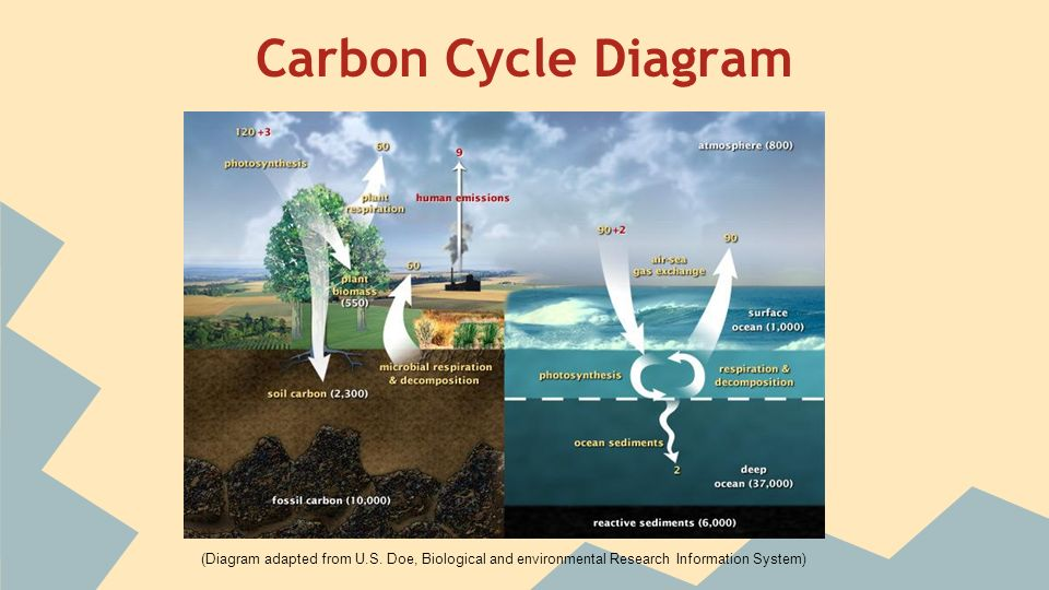 What Is The Carbon Cycle Ppt Video Online Download