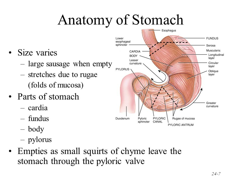 The Digestive System Ppt Video Online Download