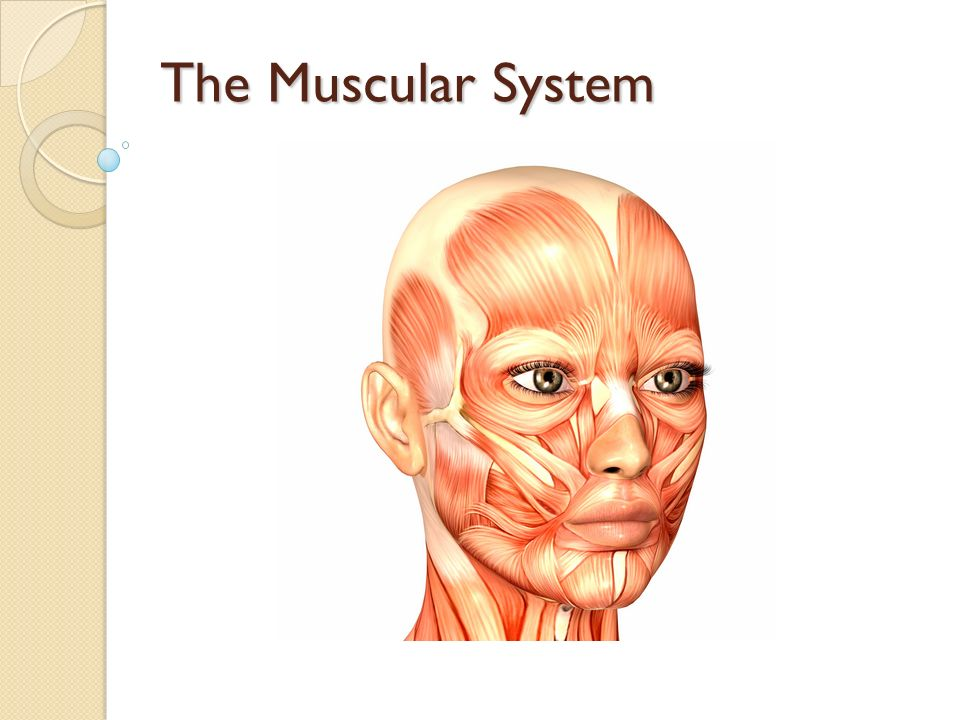 GCSE Physical Education The Muscular System - ppt video online download
