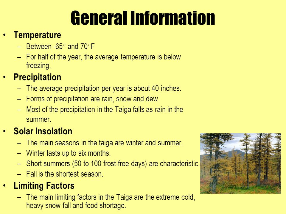 taiga biome precipitation
