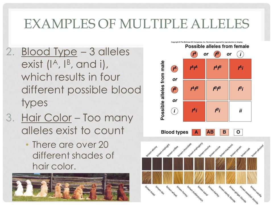 an example of multiple alleles