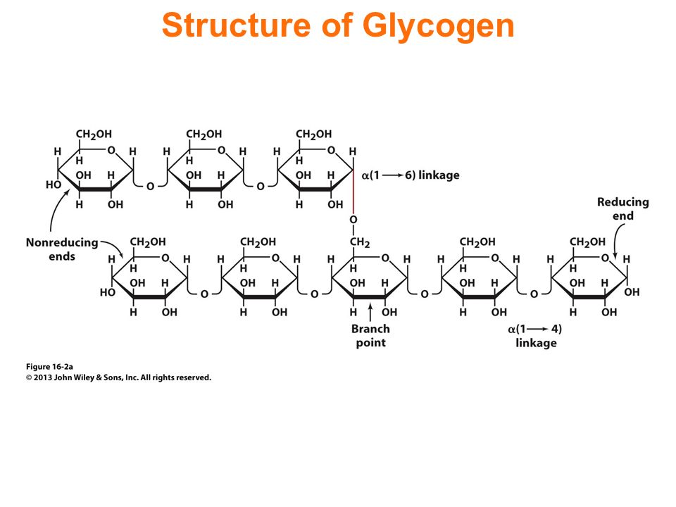 Glycogen Metabolism And Gluconeogenesis Ppt Download