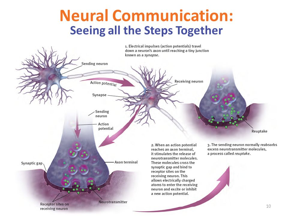 Neuron communication diagrams step by step anything wiring diagrams biological psychology ppt download rh slideplayer com diagram of two neurons diagram of two neurons ccuart