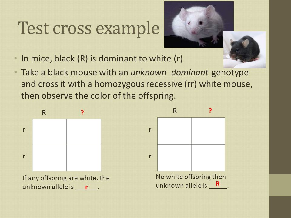 Test Crosses Incomplete Dominance And Codominance Ppt