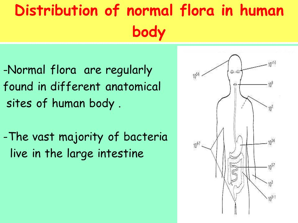 normal microbial flora of human body