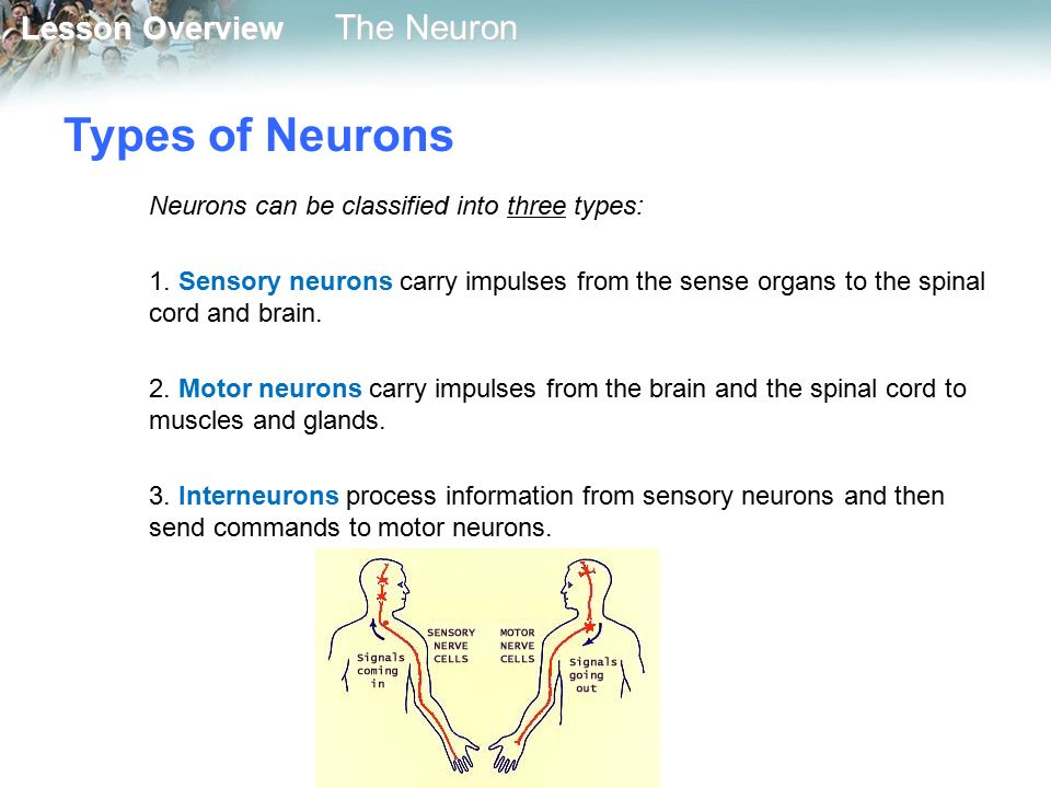 describe the functions of the nervous system