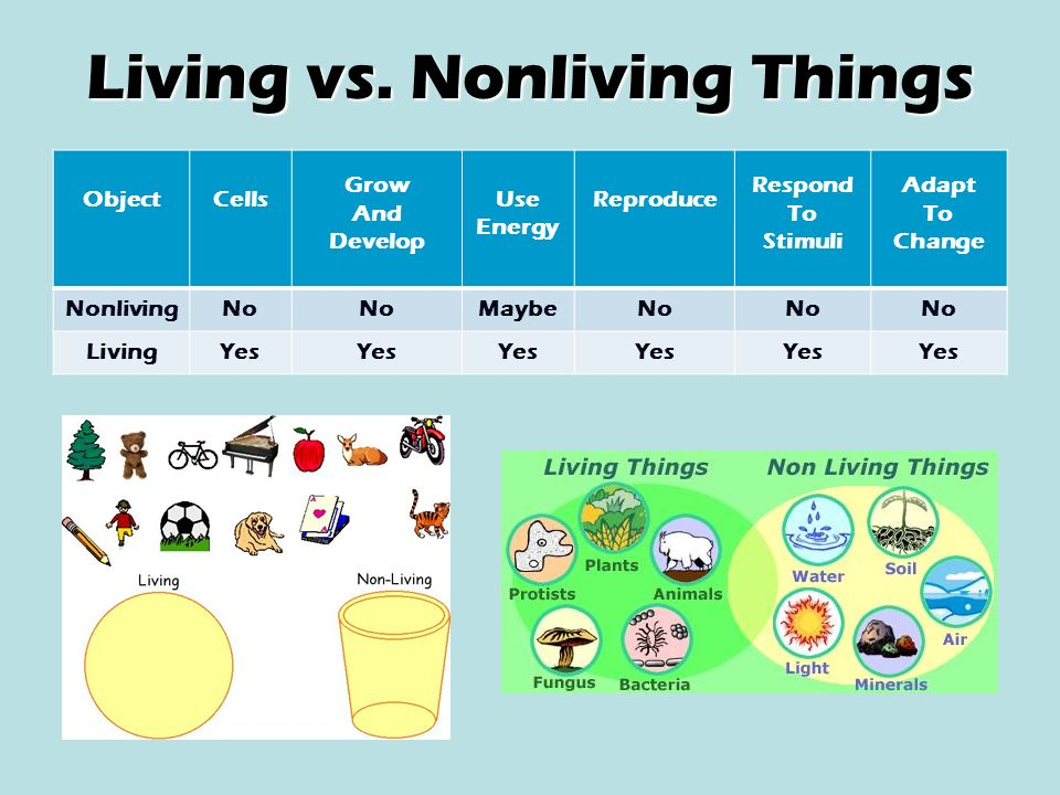 Classifying Living Things - ppt video online download
