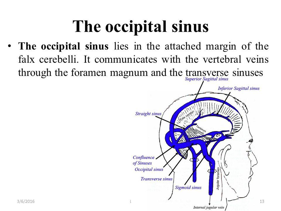 Occipital Sinus Diagram Great Installation Of Wiring Diagram