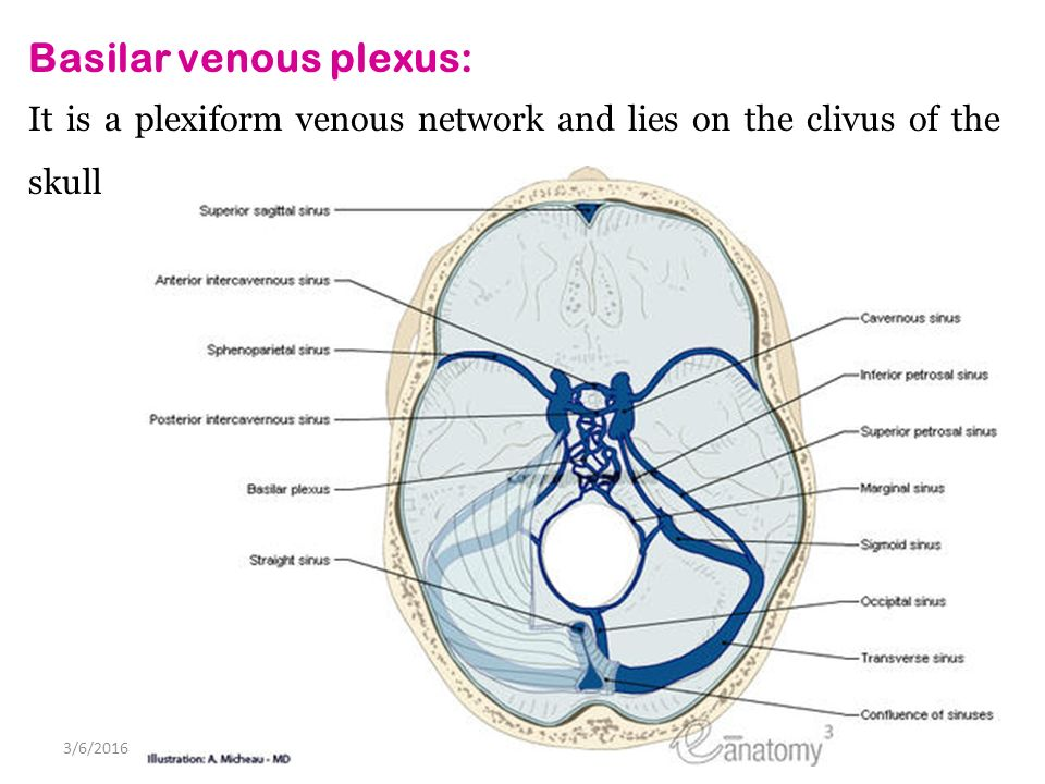 DURAL VENOUS SINUSES 4/27/2017 Lufukuja G.. - ppt video online download