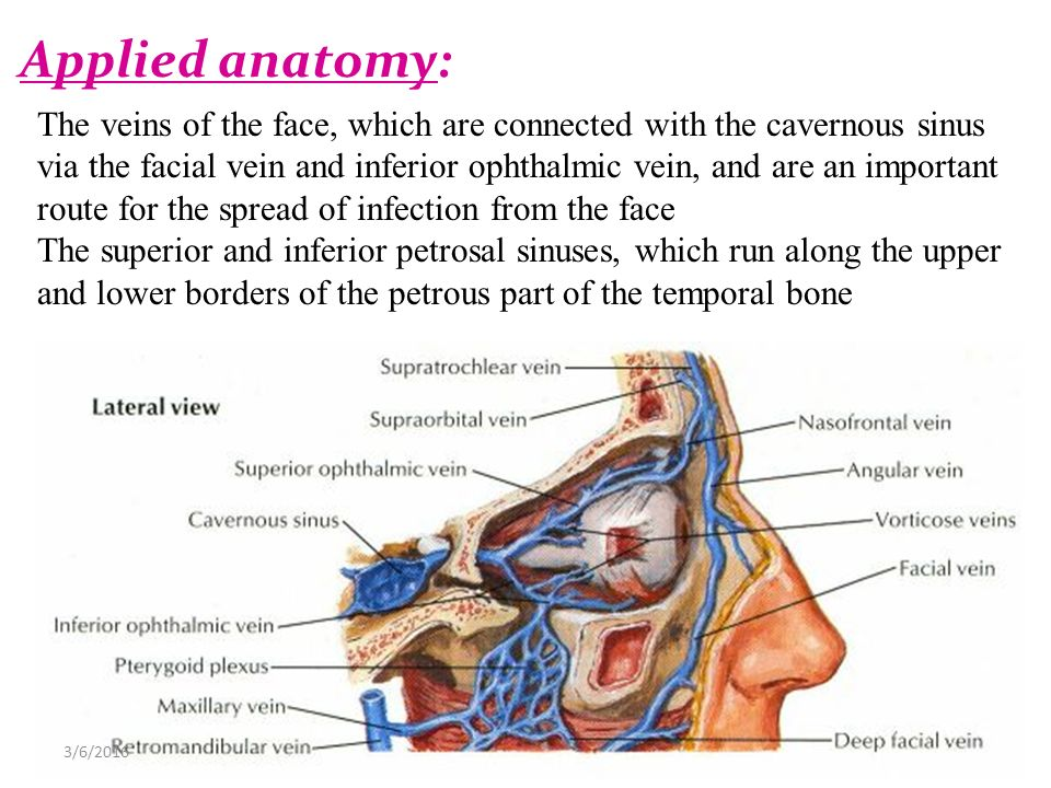 Dural Venous Sinuses 4272017 Lufukuja G Ppt Video Online Download