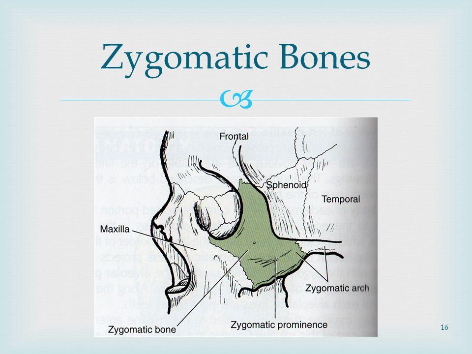 Facial Bone, Nasal Bone Anatomy, Facial Bone, Nasal Bone Projections ...