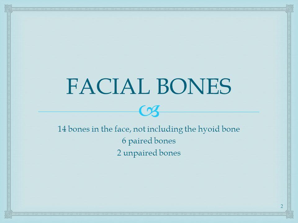 Facial Bone Nasal Bone Anatomy Facial Bone Nasal Bone Projections