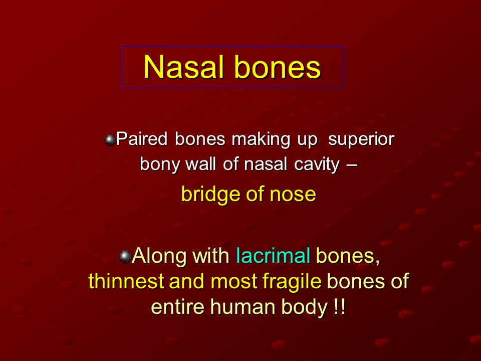 Paired bones making up superior bony wall of nasal cavity –
