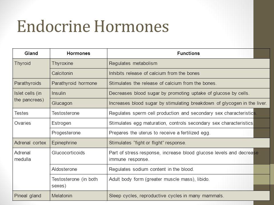 Endocrine System Ppt Video Online Download