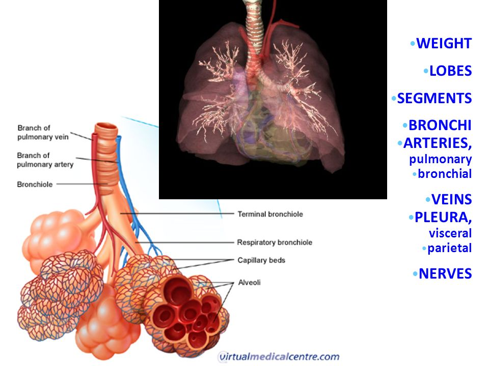 Lung Ch. 12 p (459 – 512) Feb ppt video online download