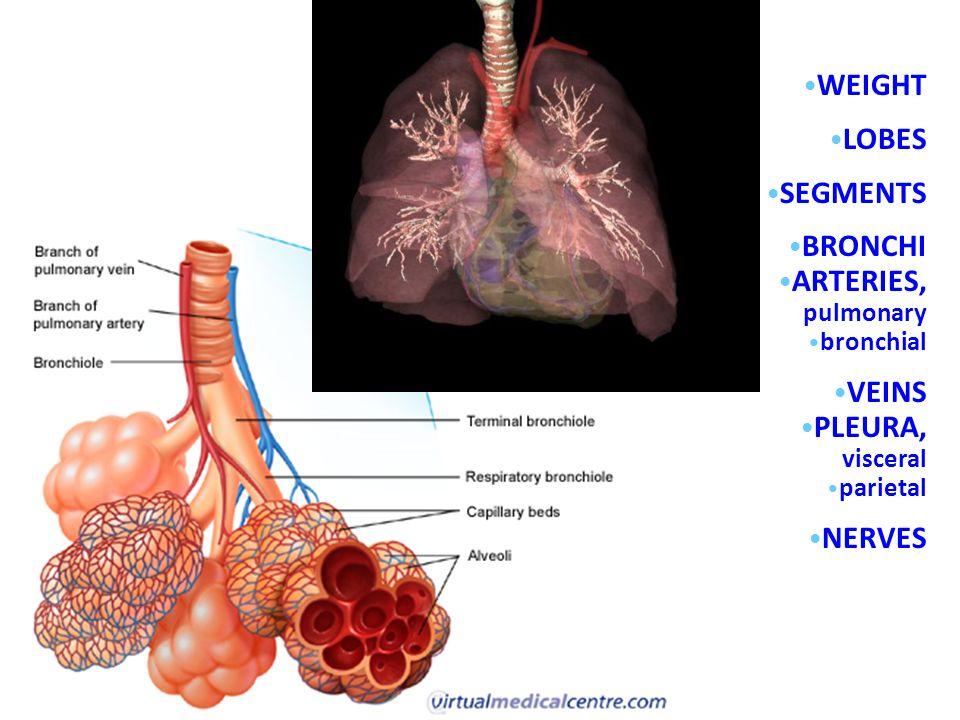 Niedlich Bronchialarterie Anatomie Fotos Menschliche Anatomie