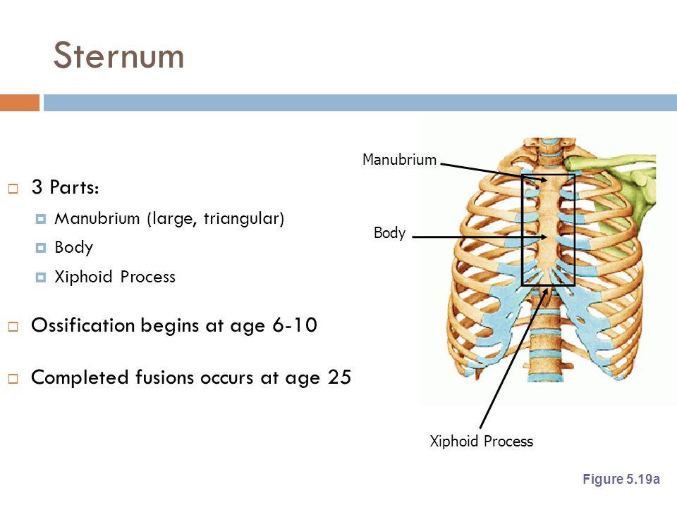 The Skeletal System. - ppt video online download