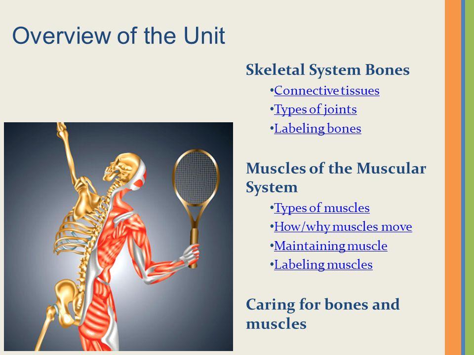 Skeletal Muscular Systems Ppt Video Online Download