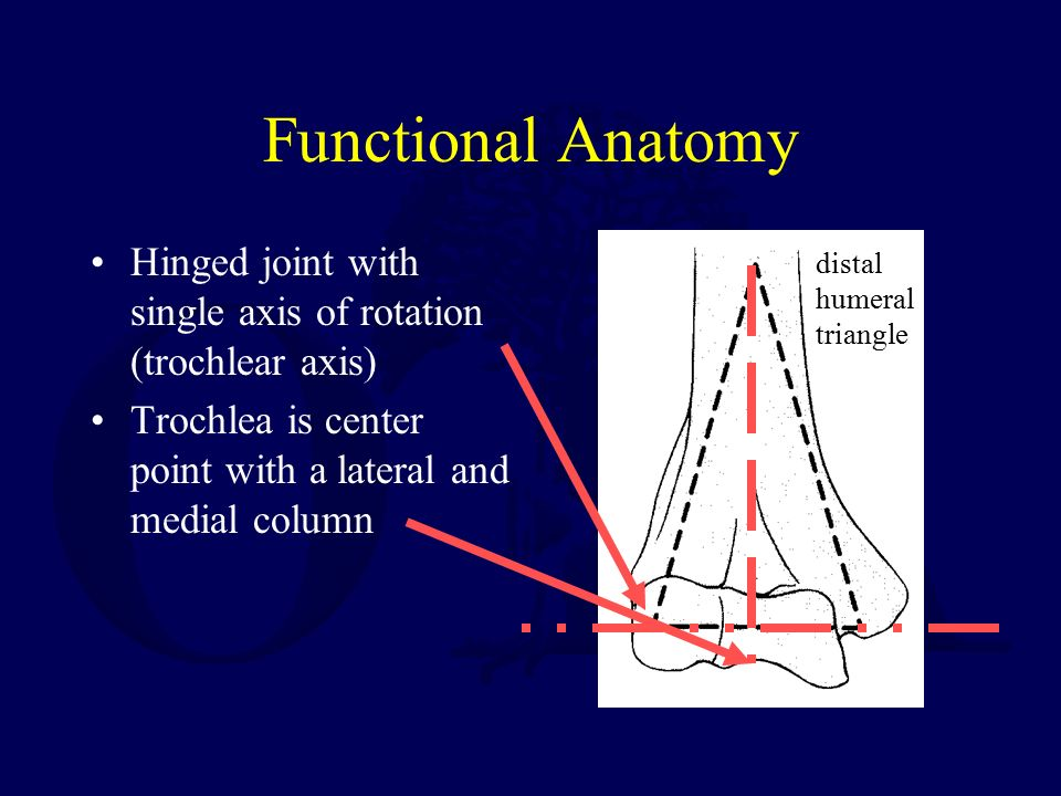 Fractures of the Distal Humerus - ppt download