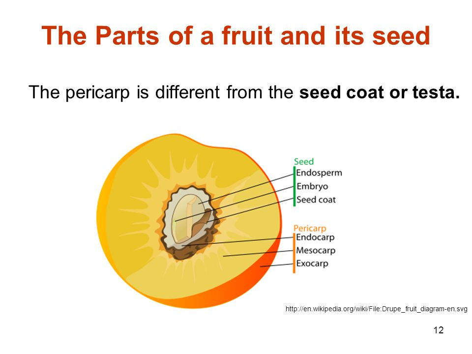 From Flowers To Fruits How Did That Happen Lets Find Out Ppt