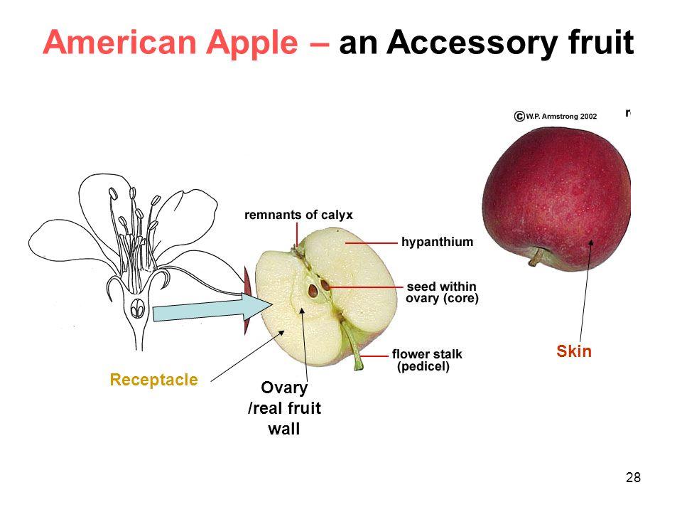 Diagram Of Apple Flower - DIY Enthusiasts Wiring Diagrams •