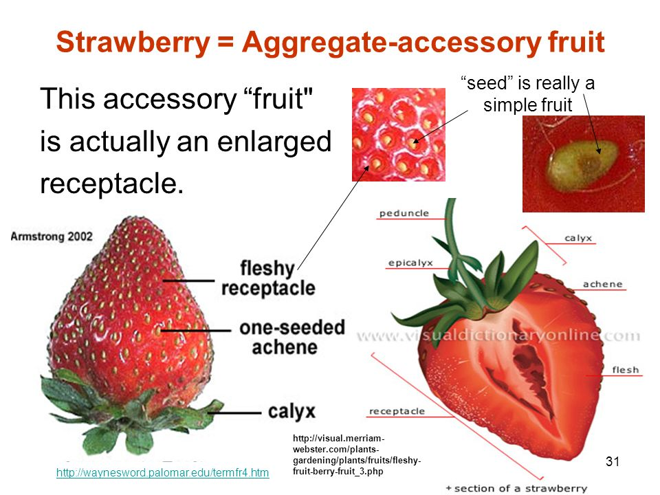 From Flowers to Fruits How did that happen? Let\'s find out! - ppt ...