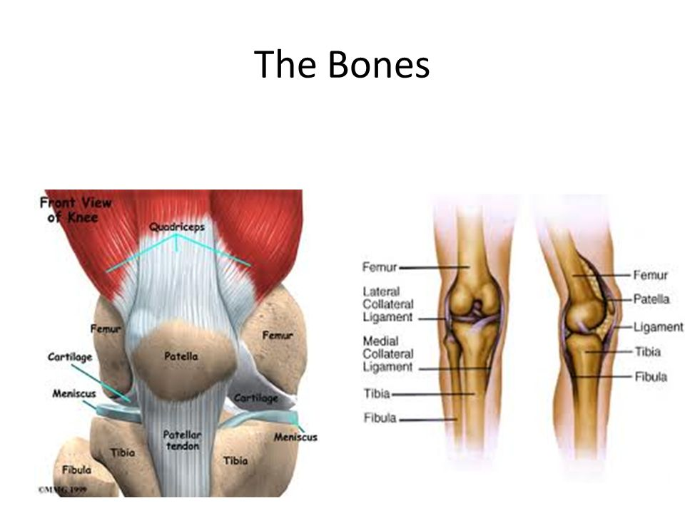The Knee Anatomy. - ppt video online download