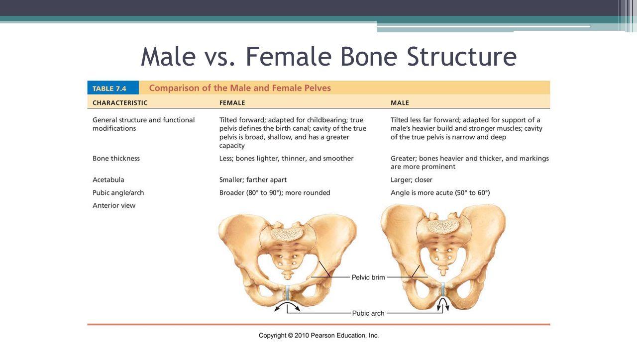Skeletal System Chapter ppt video online download
