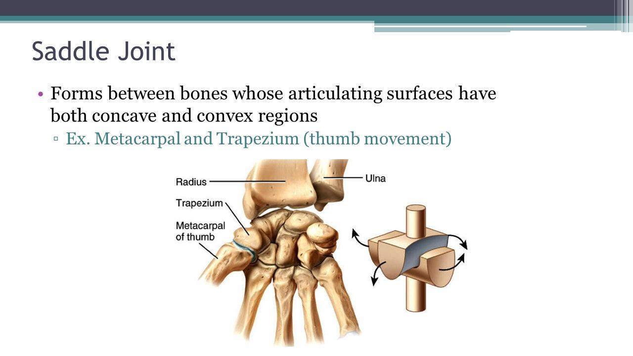 Skeletal System Chapter Ppt Video Online Download Saddle Joint Diagram 97