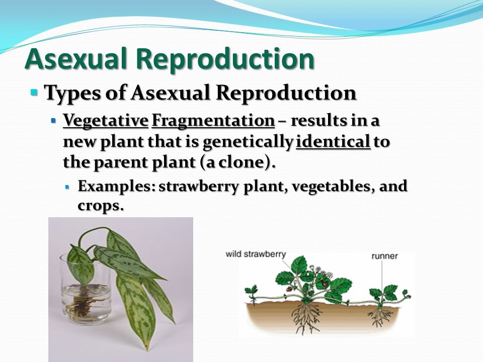 Profiluri asexual reproduction