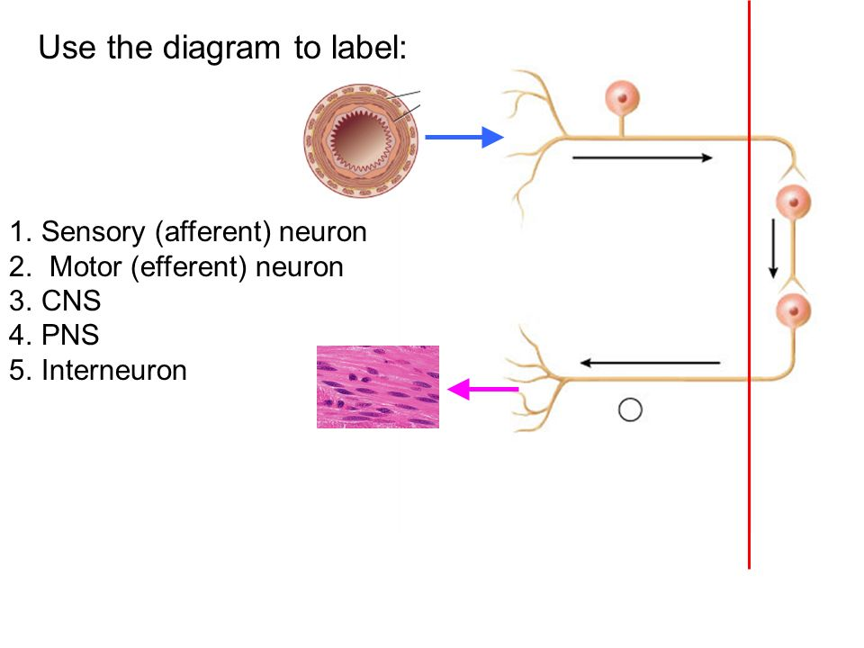 Quiz 3 available today at 3pm ppt video online download use the diagram to label ccuart Images