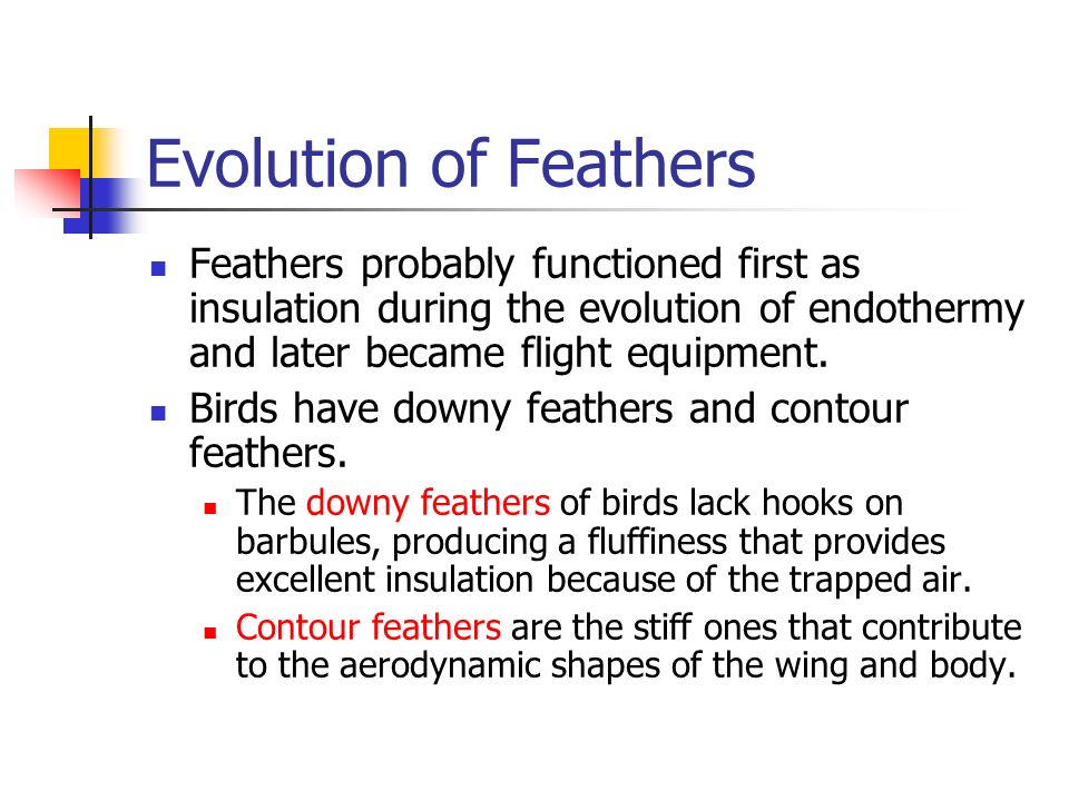 Ornithology lecture notes 1 introduction to birds & flight.