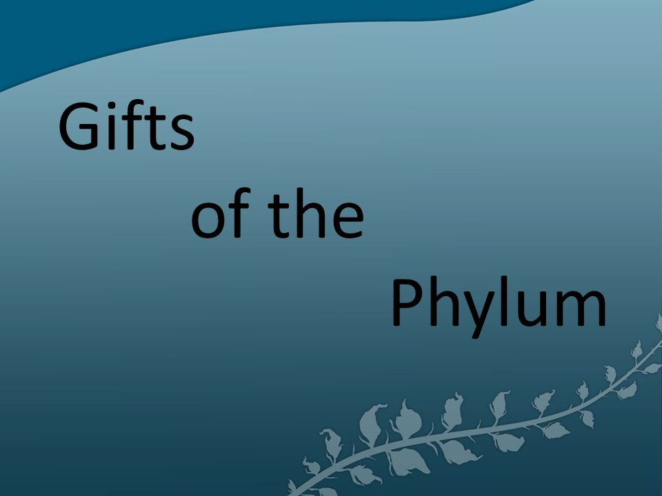 Gifts Of The Phylum Ppt Video Online Download